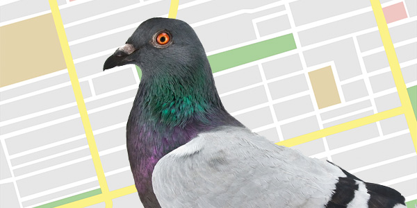Watch out for more Google Pigeon updates